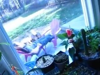 Cheating girl sucks while boyfriend relax outside